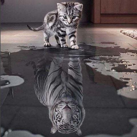 Чем примитивнее человек, тем более высокого он о себе мнения.