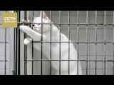 Лучшая подборка видео о котах, научившихся открывать двери