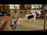 Dog Understands 1022 Words - Super Smart Animals - BBC Earth