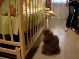 реакция кота на нового члена семьи, просто смешно