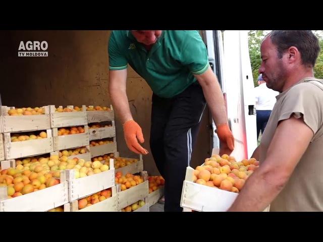 Producătorii de fructe se mândresc cu roada din 2017