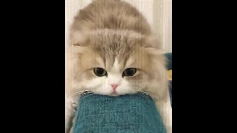 уставший кот