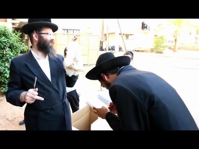 KAPAROT YOM KIPUR ISRAEL CHICKEN מנהג ה כפרות תרנגול 2012 מנהג ה כפרות