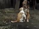 Вот так они и жили-как Кошка с собакой:он её охранял,она его любила,