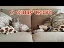 Приколы с котами с ОЗВУЧКОЙ – Смешные видео про ЖИВОТНЫХ – СМЕЯЛСЯ до СЛЁЗ с DOMI SHOW
