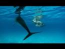 BBC Морские гиганты Голоса гигантов 2011
