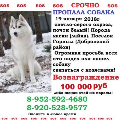 ОК  Flock  Сибирские хаски кобели на вязку щенки  bc48e81ff367d