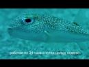 рыбка-мандалы