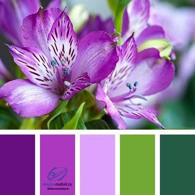 Сочетание цветов, изображение №2