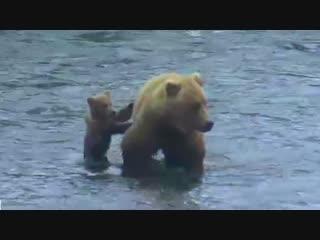 Cub Holds Onto Moms Tush - Brooks Falls - Live Cam Highlight