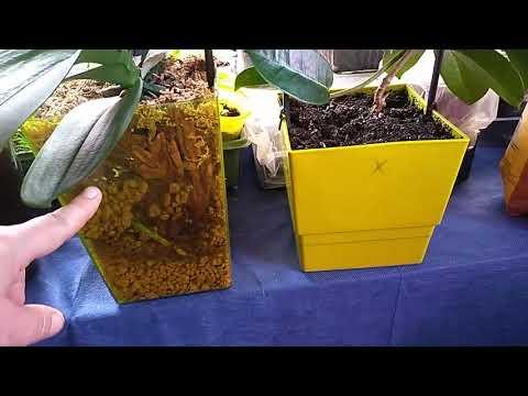Цеофлора для комнатных. Антуриум, жасмин, орхидеи в ЦеоФлоре!