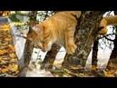 Кот в октябре...🎼🎵🎶 Красивая музыка