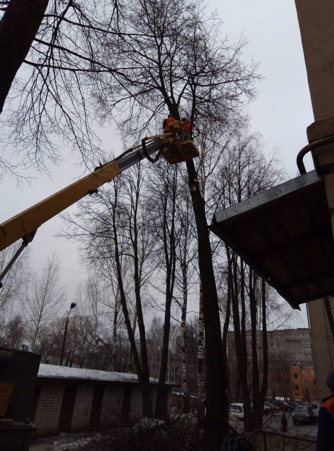 Улица Большева дом 15 спил и кронирование