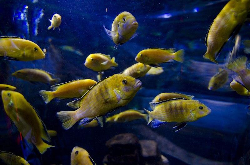 Крупнейший в мире аквариум в ТРЦ Дубай Молл, ОАЭ, изображение №7