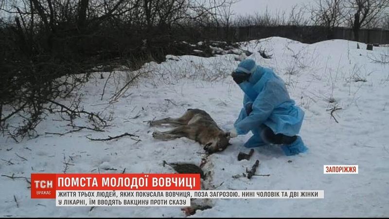 Кривава помста місцеві жителі розповіли причини нападу вовчиці на Запоріжжі