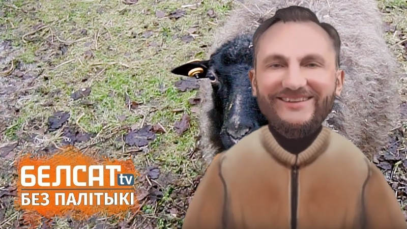 У Еўразвязе авечкі замест газонакасілак Вяскоўцы В Евросоюзе вместо газонокосилок овечки