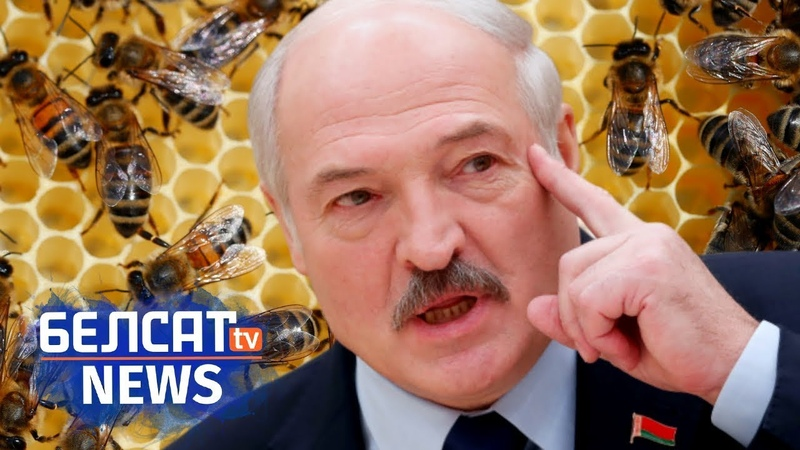 Лукашэнка прасочыць за пчоламі. Навіны за 23 ліпеня | Лукашенко проследит за пчелами
