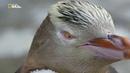 Nat Geo Wild Дикая природа Новой Зеландии затерянный рай ⁄ Wild New Zealand Lost Paradise