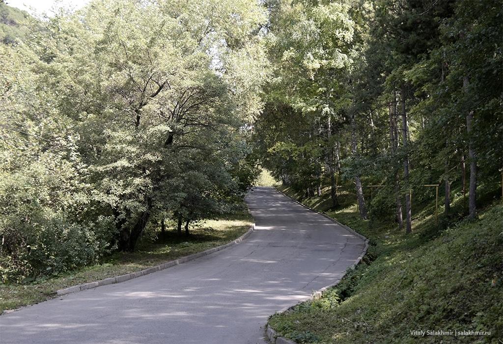 Природа в Иле-Алатауском парке, Березовая роща Алматы 2019
