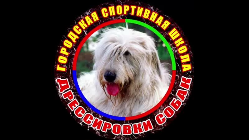 Городская Спортивная Школа Дрессировки собак г.Тольятти 19.mp4