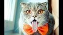 Funny cats Смешные коты Приколы про котов и кошек до слез Смешные кошки 2020