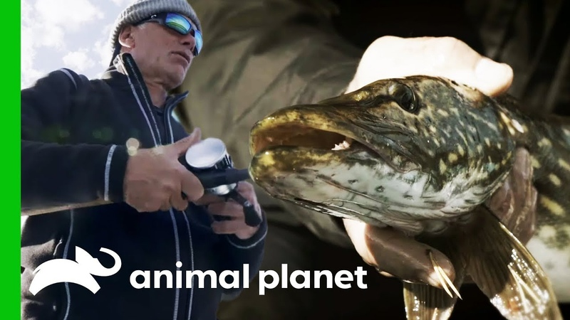 Jeremy Searches For Monster Pike in the Lakes Of Sweden Jeremy Wade's Dark Waters