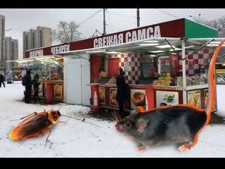 Узбечка рассказала, кто и как готовит самсу в Екатеринбурге