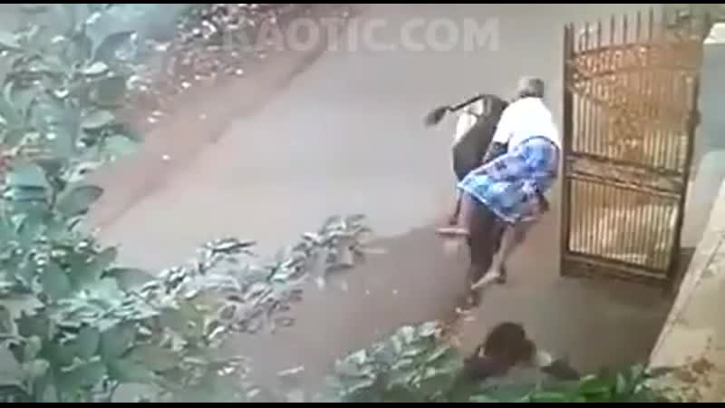 Mad cow 🐄 throws a man like bag of shit💩