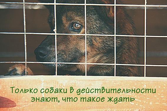 пределах не бойтесь брать животных из приюта стихи стрижка нашем