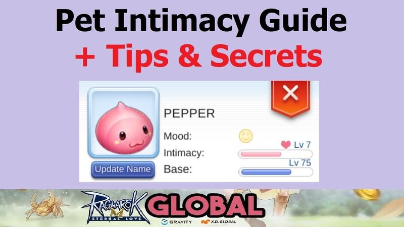 Ragnarok M Pet Intimacy Guide Tips Secrets to Get Lv10 Quicker (Ragnarok M Eternal Love)