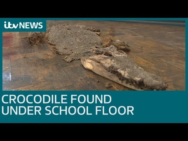 Crocodile found buried under floor of Welsh school | ITV News