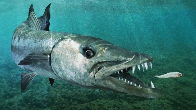 Топ 10 САМЫХ БЫСТРЫХ рыб в мире Даже гепард может позавидовать некоторым из них