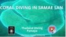 Coral,fish,wreck and experience diving in Samae San with diving center Thailand Diving Club Pattaya