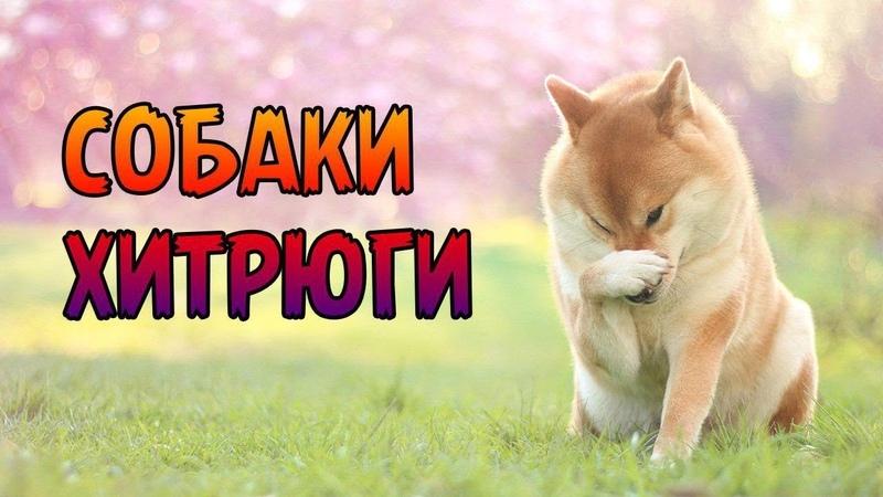 Ученые установили что собаки способны на обман ради лакомства