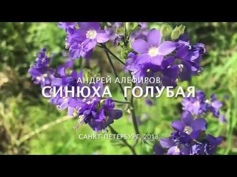 Синюха голубая Алефиров А Н