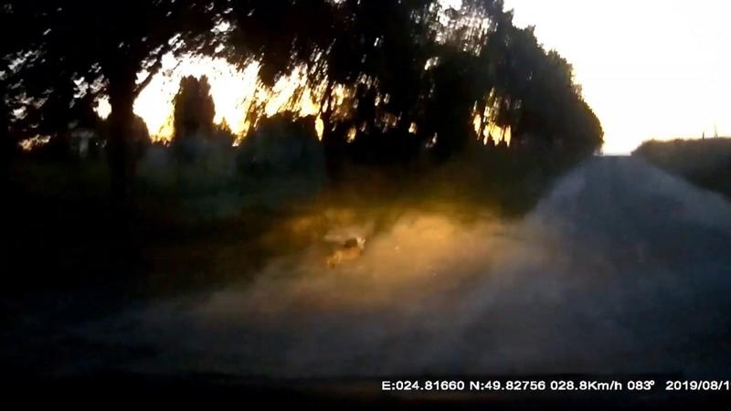 Веселый водитель Травля бешеного зайца и только ворота на погост спасли незадачливого спринтера
