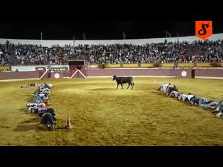Интересный конкурс с быком! Человеческая фантазия способна на многое)