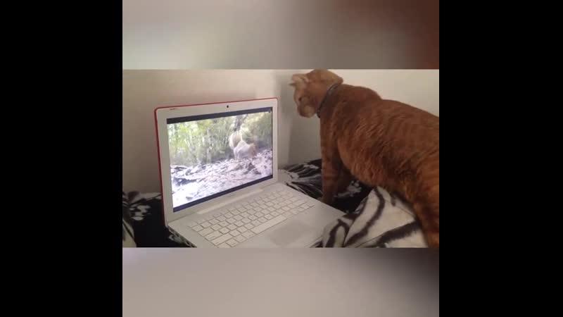 Озадаченные кошки и собаки