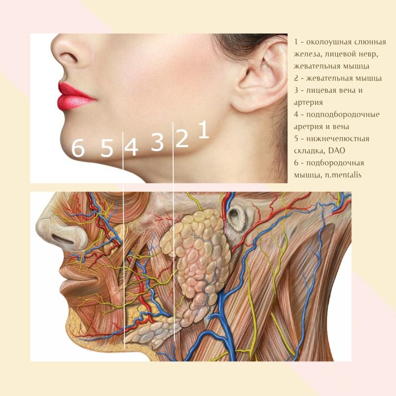 Коррекция в зоне нижней челюсти., изображение №6