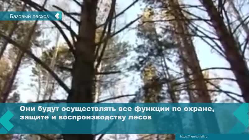Лесхоз Иркутской области будет реорганизован об этом заявил глава Прибайкалья Игорь Кобзев