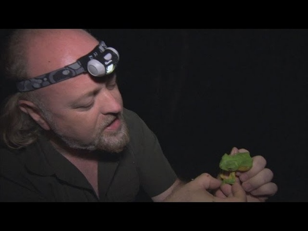 Wallace's Flying Frog Bill Bailey's Jungle Hero Episode 1 BBC Two