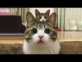Смешные коты | Подборка за неделю #14 | Котопятница