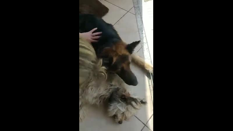 This dog thought his friend who was anesthetized had died because he wasnt moving so he started hugging him and