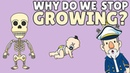 Why Do We Stop Growing?