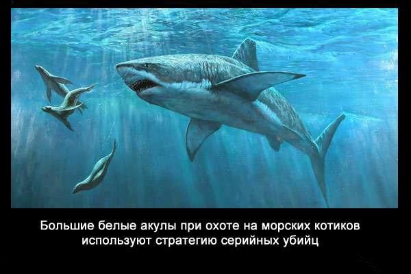 валтея - Интересные факты о акулах / Хищники морей.(Видео. Фото) Vh_vWYhJXxo