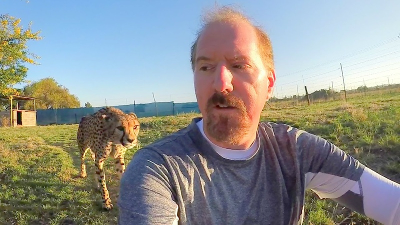 Turning Your Back To Leopards Cheetahs BIG CATS Show Their Predatory Nature Part 2