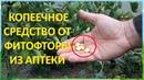 За ВОСЕМЬ рублей обработал от болезней ДВЕ теплицы с огурцами и томатами Фурацилин от фитофторы