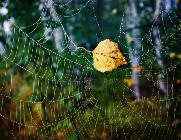Финны разработали полностью разлагаемый биопластик из березовой мякоти и паутины