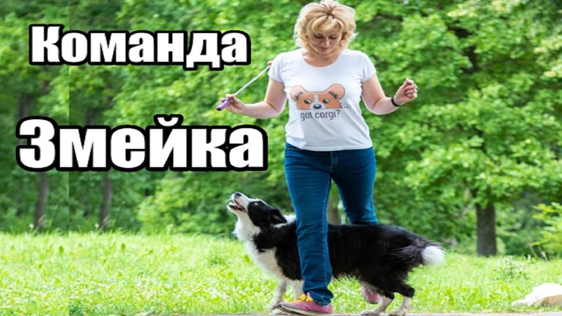 Команда ЗМЕЙКА Поэтапное обучение усложнение секреты красивого исполнения Дрессировка собак