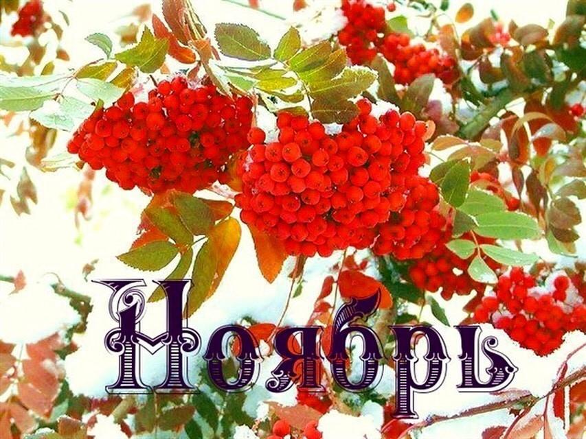 Рамка открытки с цветами для